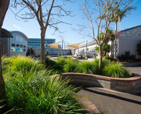 Rangitoto College 11